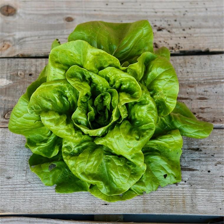 benefits lettuce salad lettuce green salad