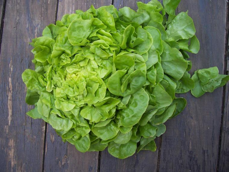 benefits lettuce green salad