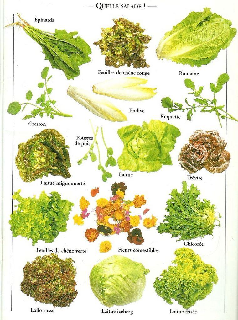 benefits green salad varieties