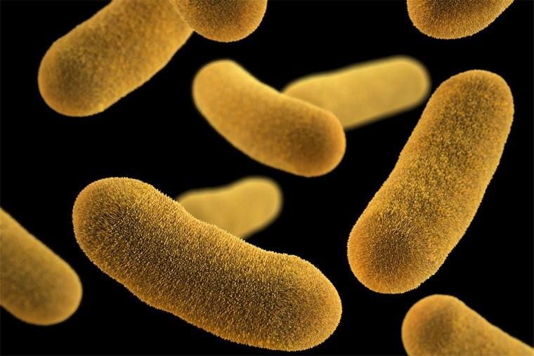 dangerous bacteria health state