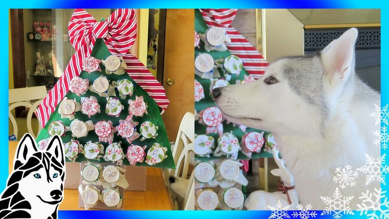 delicious fir for dogs