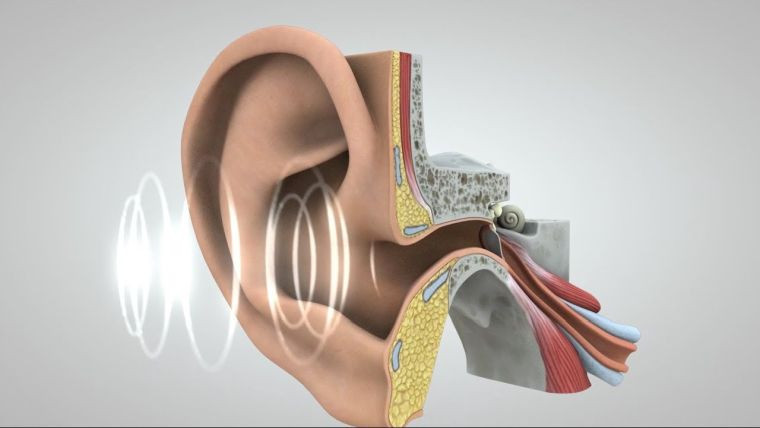 the effects of noise pollution on hearing