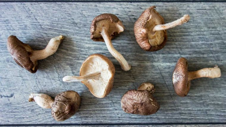 shiitake to boost your immune system