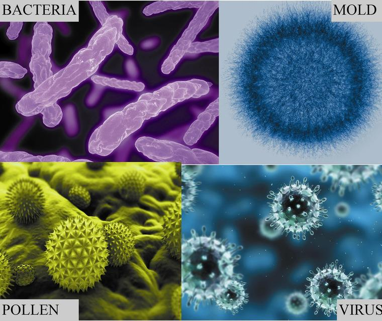 pollen mold attention breathing