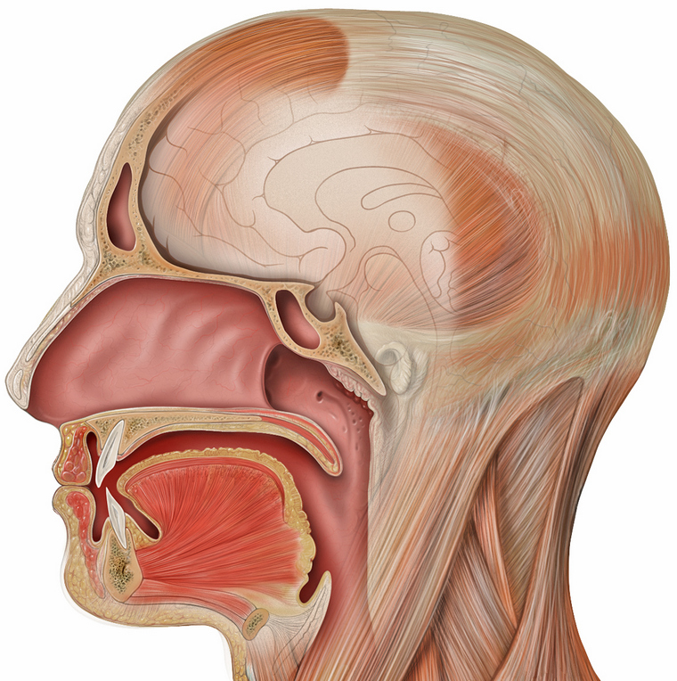 human mouth esophagus image