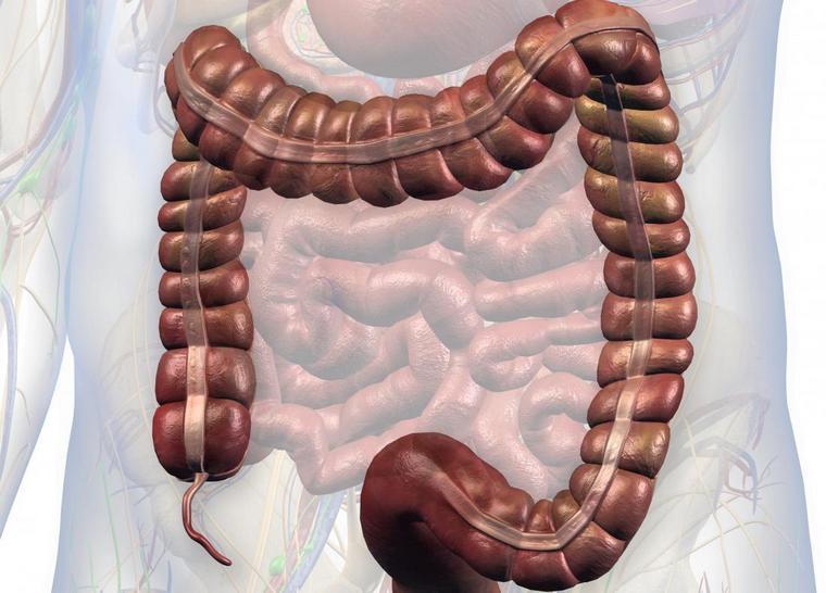 imae colon appendix digestive system