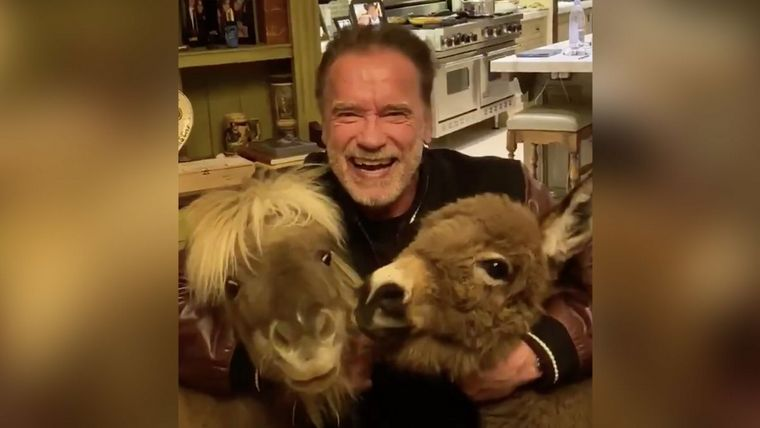 Arnold Schwarzenegger coronavirus board