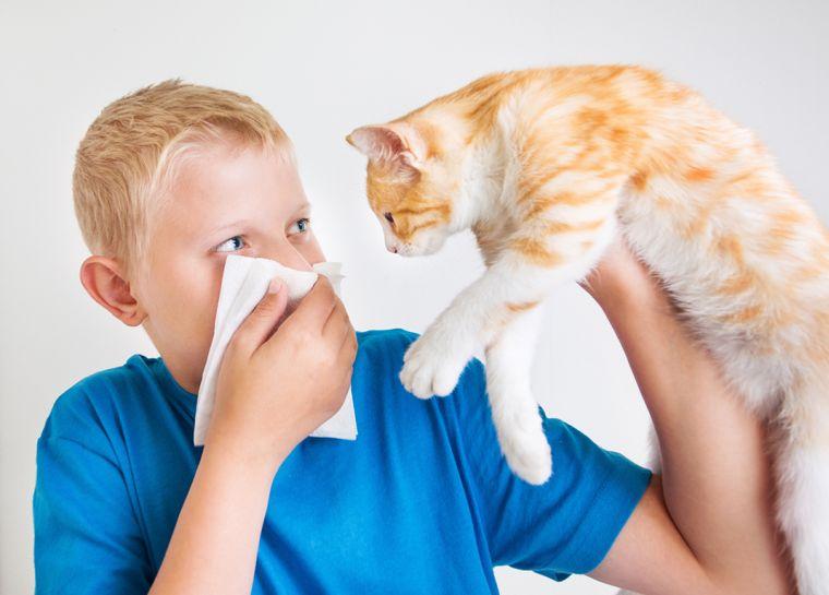 pollen allergy in children
