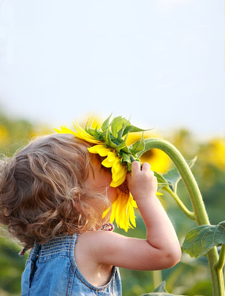 seasonal allergies from pollens