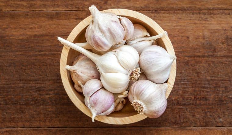 garlic immune system benefits