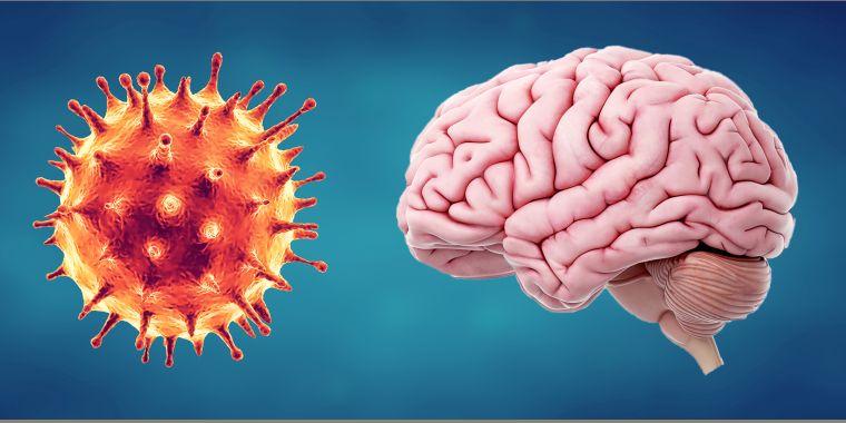 coronavirus consequences on the brain