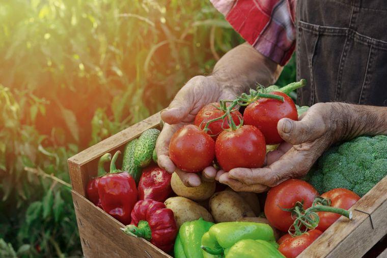 healthy autumn diet