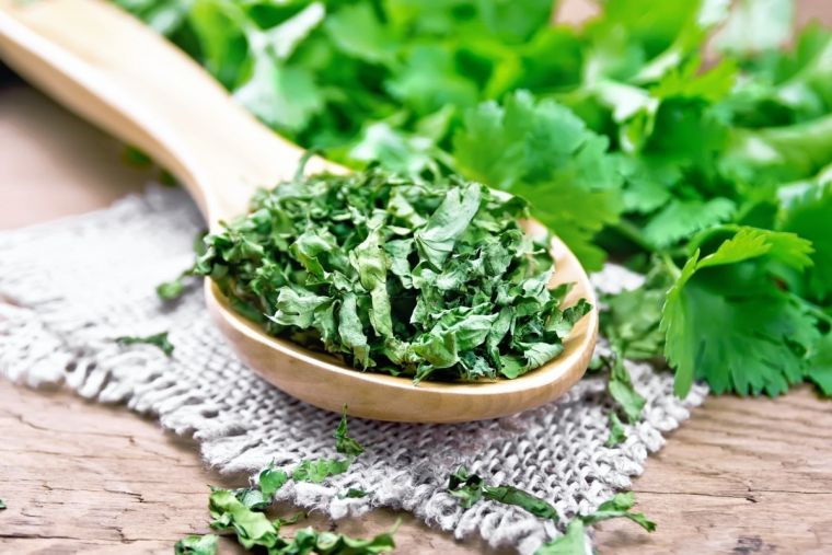 cilantro is good for you