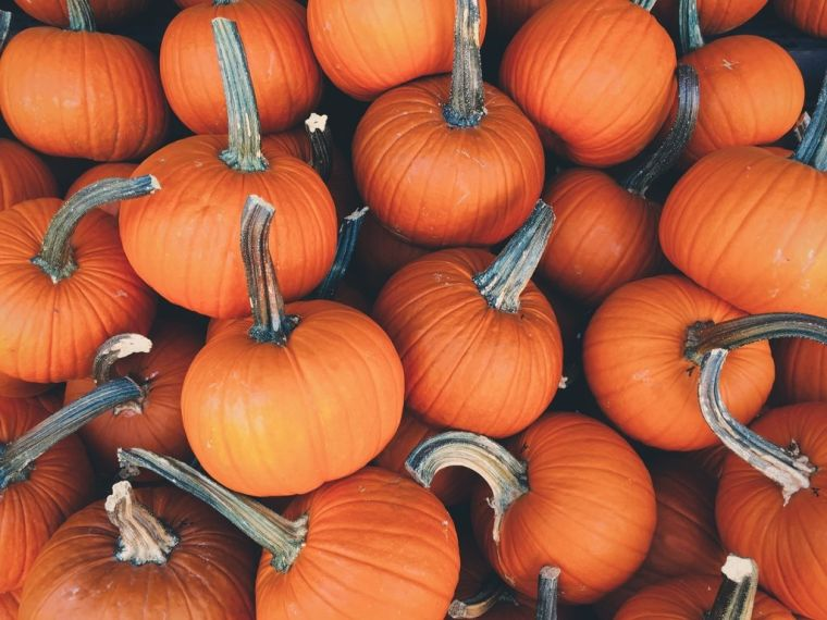the pumpkin to eat in season