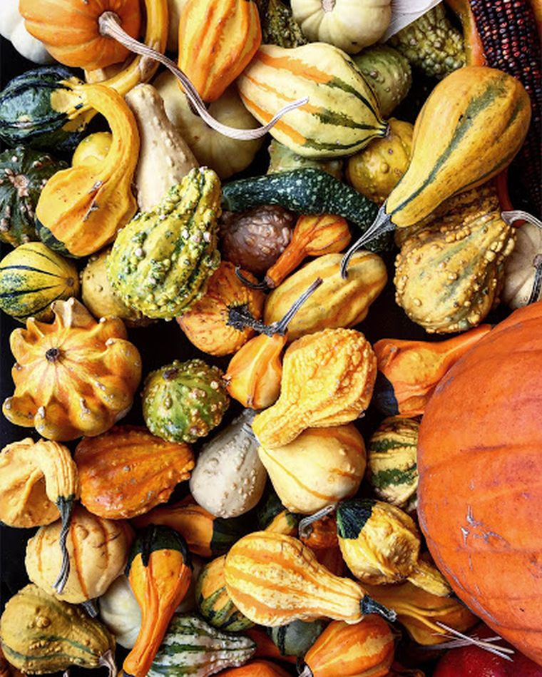 squash to eat in season