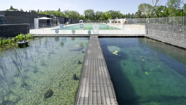 biological swimming pool advantages know everything