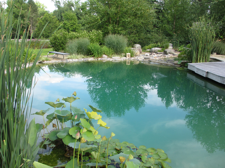 pool without chemicals