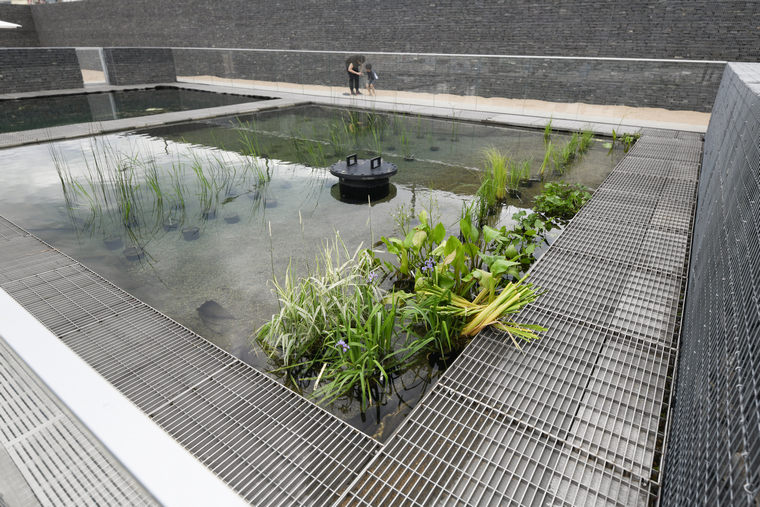 plants to plant to clean water swimming pool