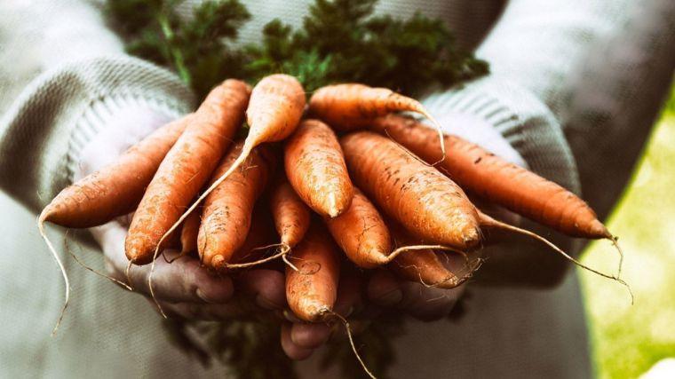 healthy autumn season products