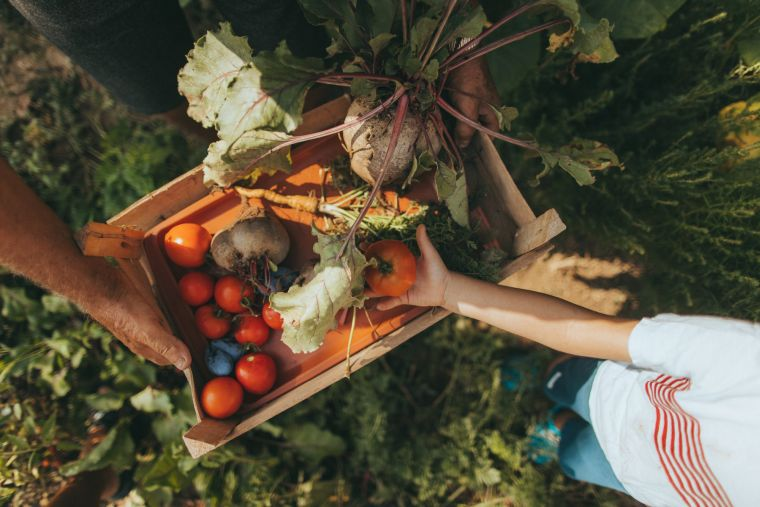 what to eat in autumn