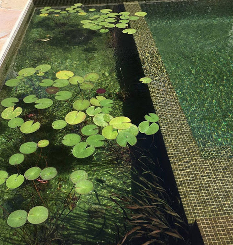 vegetation biological swimming pool avoid contamination